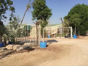 HWAD AL bahia 10 300x225 - Al Bahia Plant Nursery