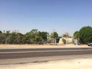HWAD AL bahia 11 300x225 - Al Bahia Plant Nursery