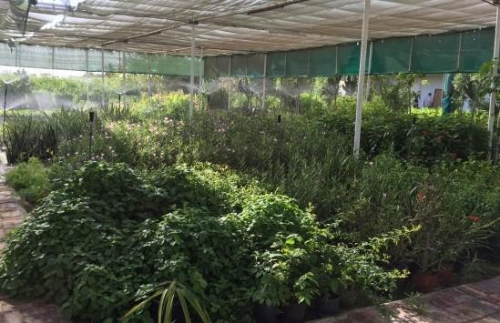 HWAD Al Bahia86 e1443077389403 - Al Bahia Plant Nursery