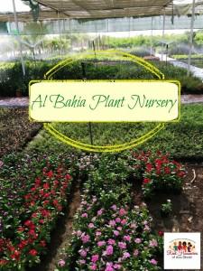 HWAD Al Bahia881 225x300 - Al Bahia Plant Nursery