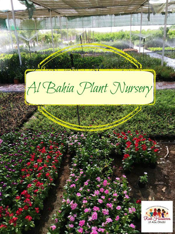 Al Bahia Plant Nursery